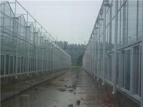 中牟阳光板-玻璃温室