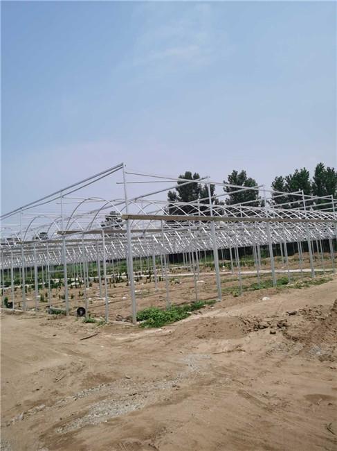 焦作温室大棚项目