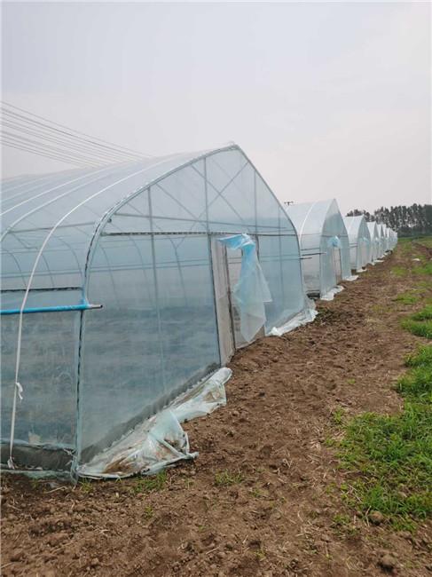 开封水稻乡项目-薄膜大棚