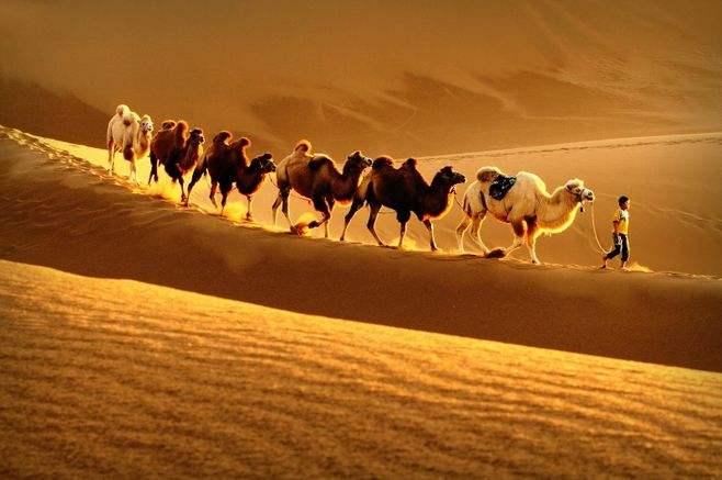 兄弟營組織銀川團建有一手,看沙漠穿越注意事項