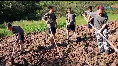 在劳动中成长