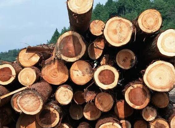 木材产品在加工主要有哪些可变性