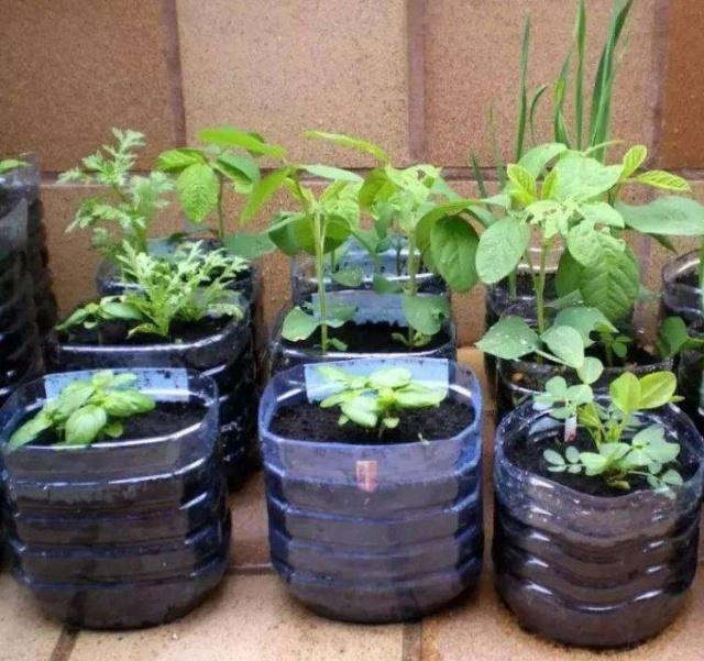 廢棄塑料桶3種妙用小方法,替代花盆成為養花種菜的容器