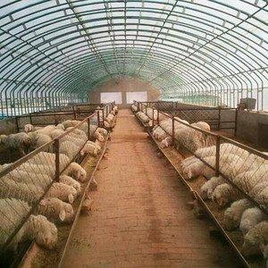 搞养殖业需要前期准备哪些设备?