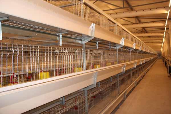 如何解决养殖设备的湿帘除臭?