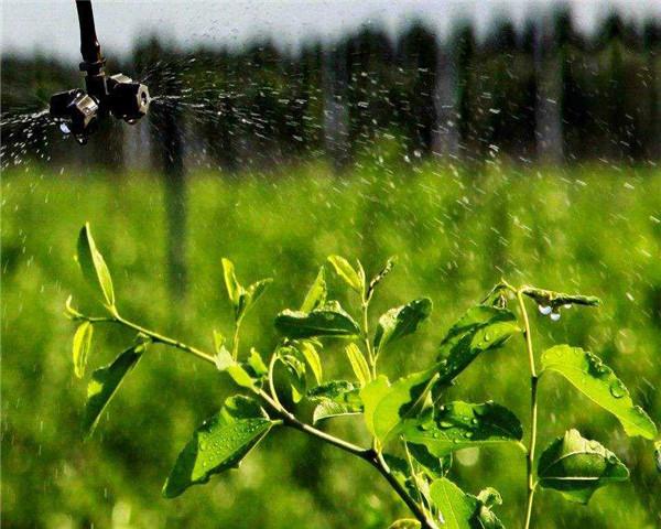 智慧农业看宁夏,川雨帮您智能化