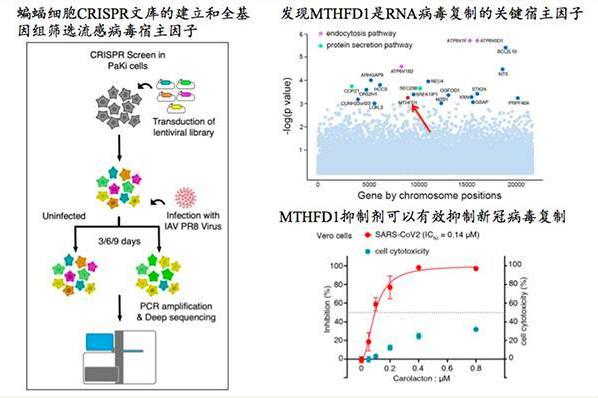 清华等团队发现新冠病毒抑制剂