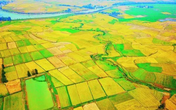 合肥出台政策加强农业科技创新
