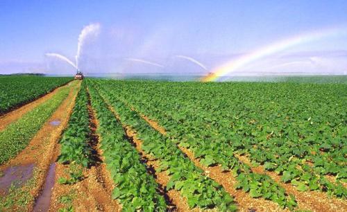 大棚蔬菜节水灌溉方法和注意事项