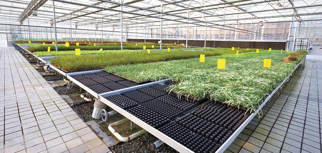 智慧农业:科技应用促增产