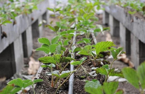 园林常用的4种节水灌溉技术