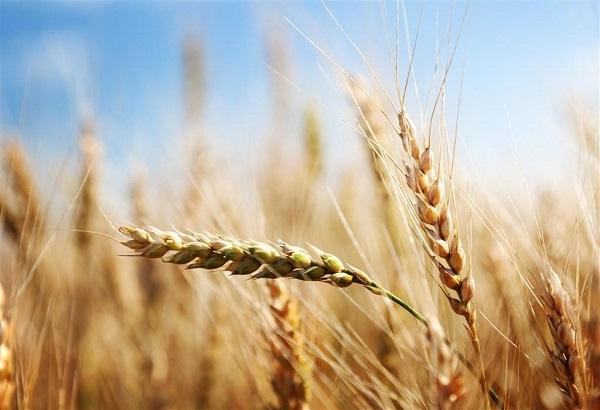 宁夏科技智慧农业