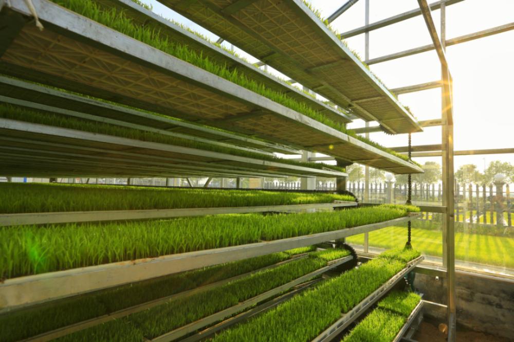 智慧农业:智能科技让农业更有魅力