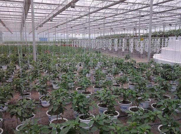 大棚蔬菜节水灌溉方法