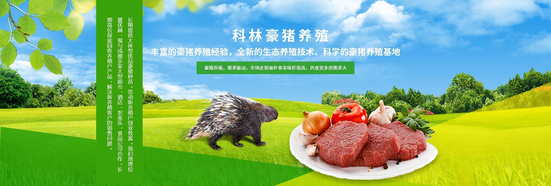 四川豪猪养殖