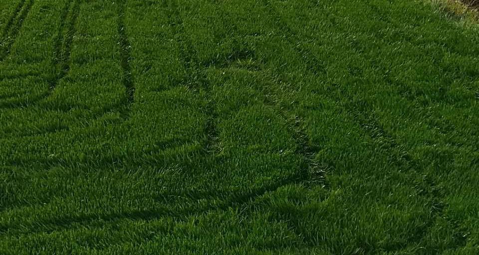 成都混播草