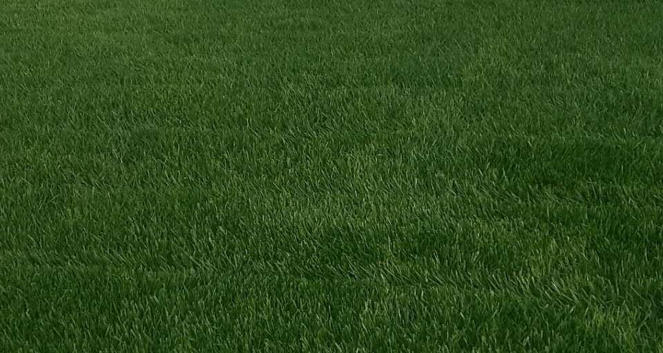 成都绿化养护-混播草