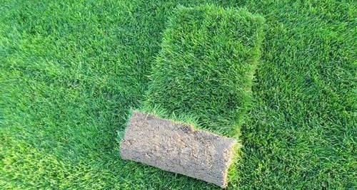 成都草坪-混播草