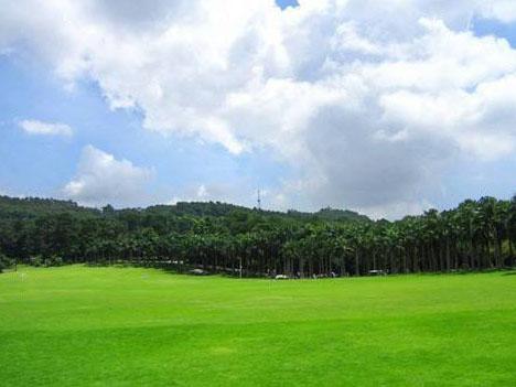 绿化草坪案例