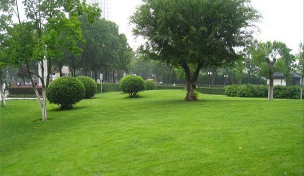 成都草坪基地用途可以分为这八大类