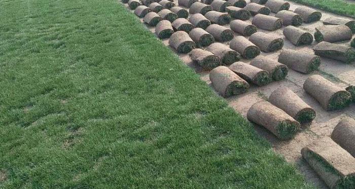 成都草坪上有虫子怎么办?小编教你一秒解决
