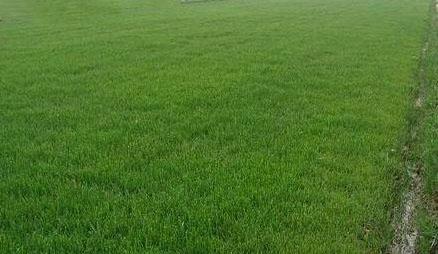 成都草坪的日常维护