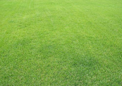 成都百慕大草坪价格