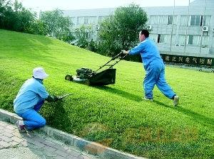 成都绿化养护的园林花灌木修剪技术