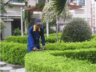 成都绿化养护施工