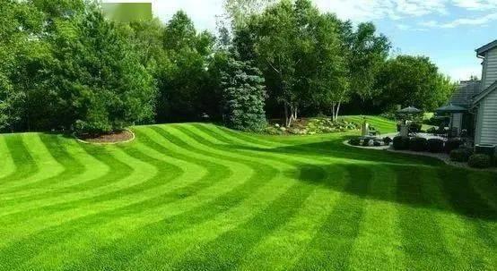 园林绿化小知识