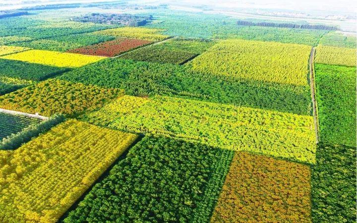 成都苗木基地给苗木施哪种有机肥?