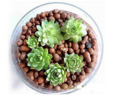 花卉陶粒怎么用?花卉陶粒的使用方法介绍