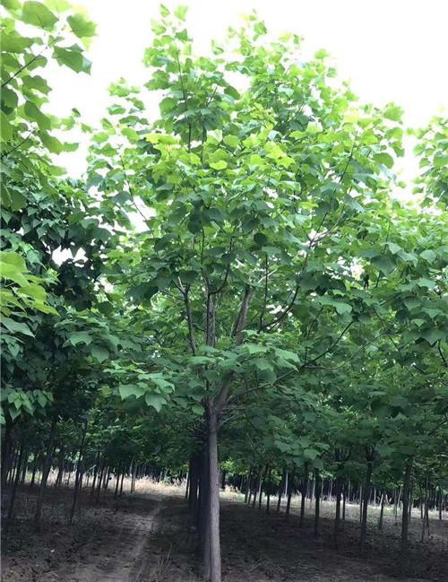 怎样可以有效的促进花木生根?具体的操作方法有什么