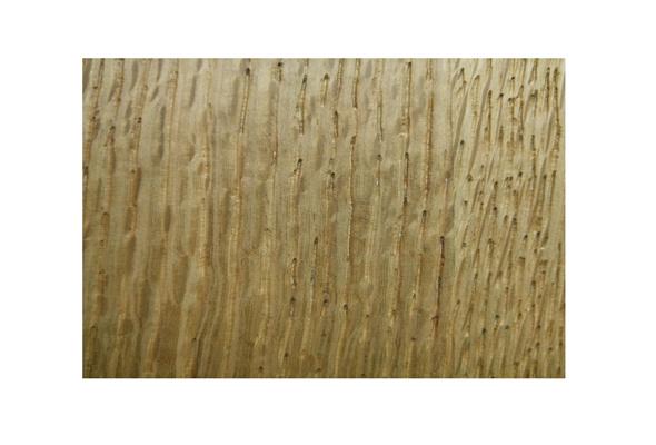 四川木皮板