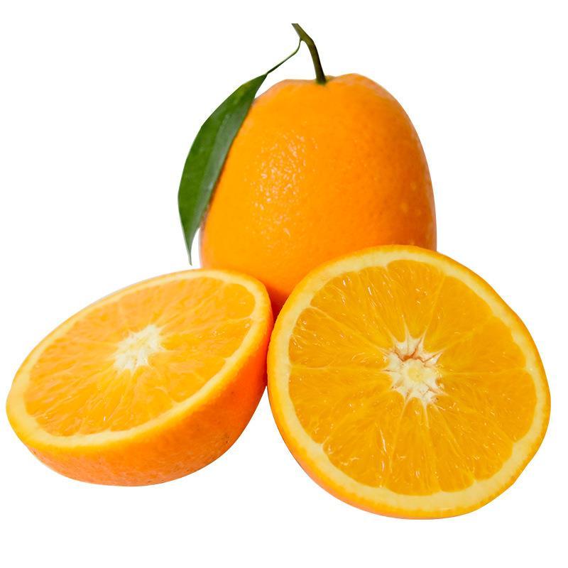 长虹脐橙现摘现发
