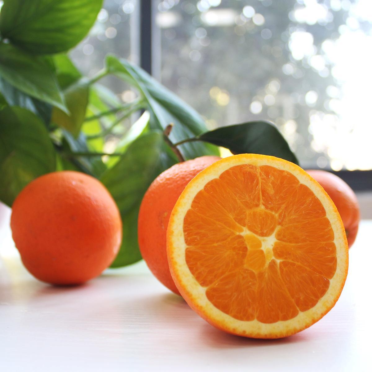 脐橙哪家好