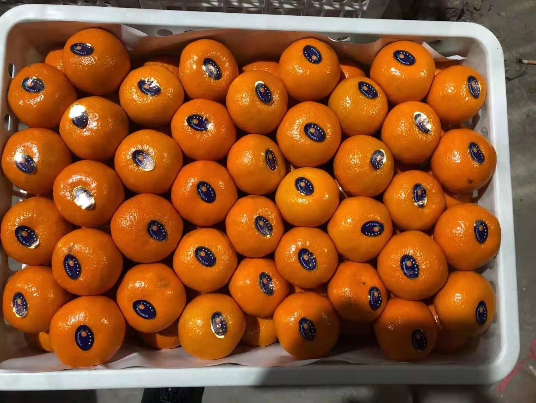 水果打蜡价格