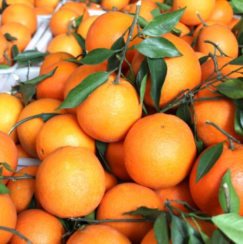 秭归脐橙销售批发厂家
