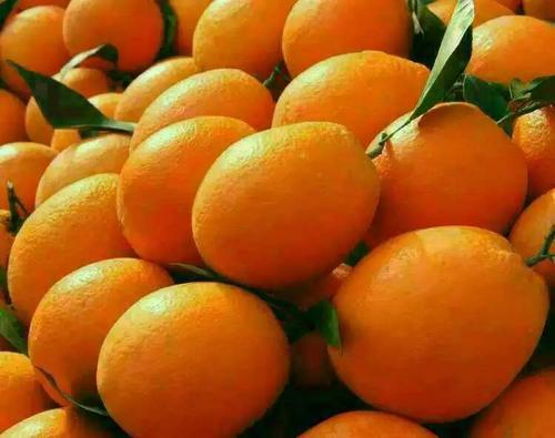 宜昌秭归脐橙之纽荷尔