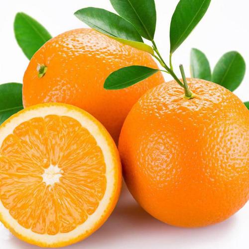 秭归脐橙代办批发