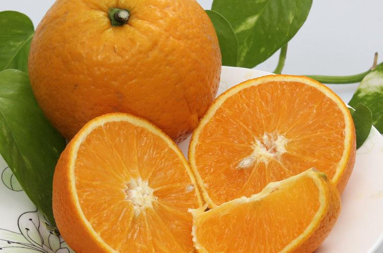 秭归脐橙厂家