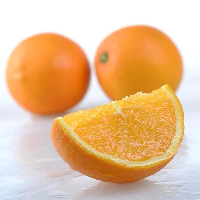 脐橙批发销售厂家