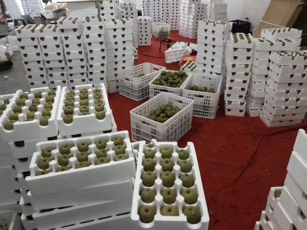 不同的水果采用的包装运输方式不同,宜昌秭归蜜桔选用的水果塑料筐较多