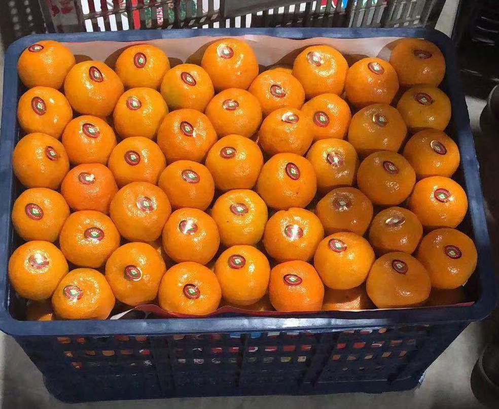 春节期间,购买宜昌秭归蜜桔的次数明显增加,橘子除了美味还有哪些好寓意呢
