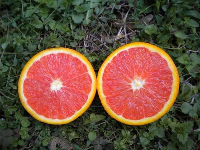 你都品尝过哪些不同品种的脐橙?什么是卡拉卡拉橙?荣升小编为您解答