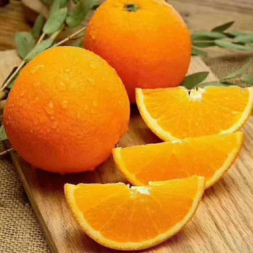 宜昌纽荷尔脐橙