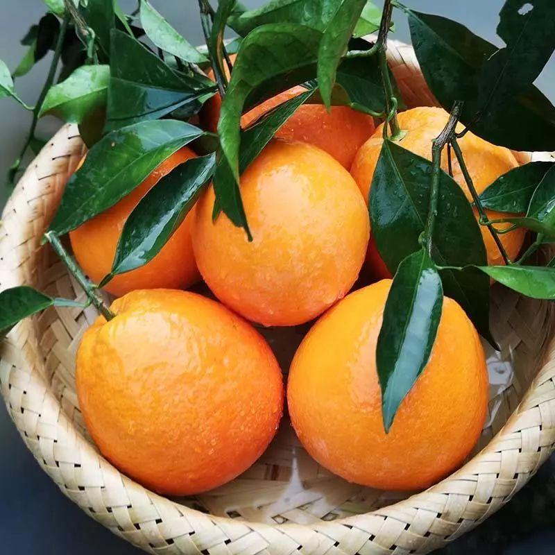 纽荷尔脐橙批发厂家销售价格