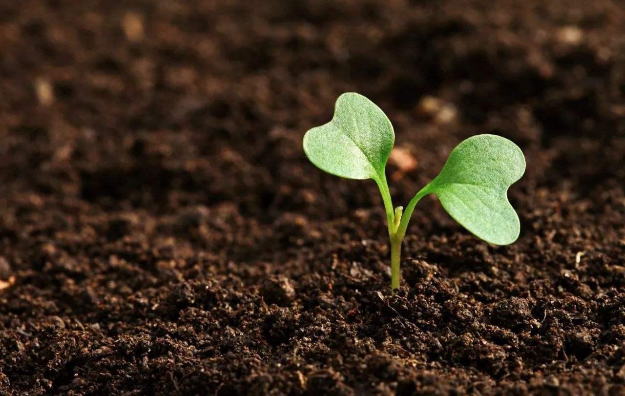 土壤和底泥检测