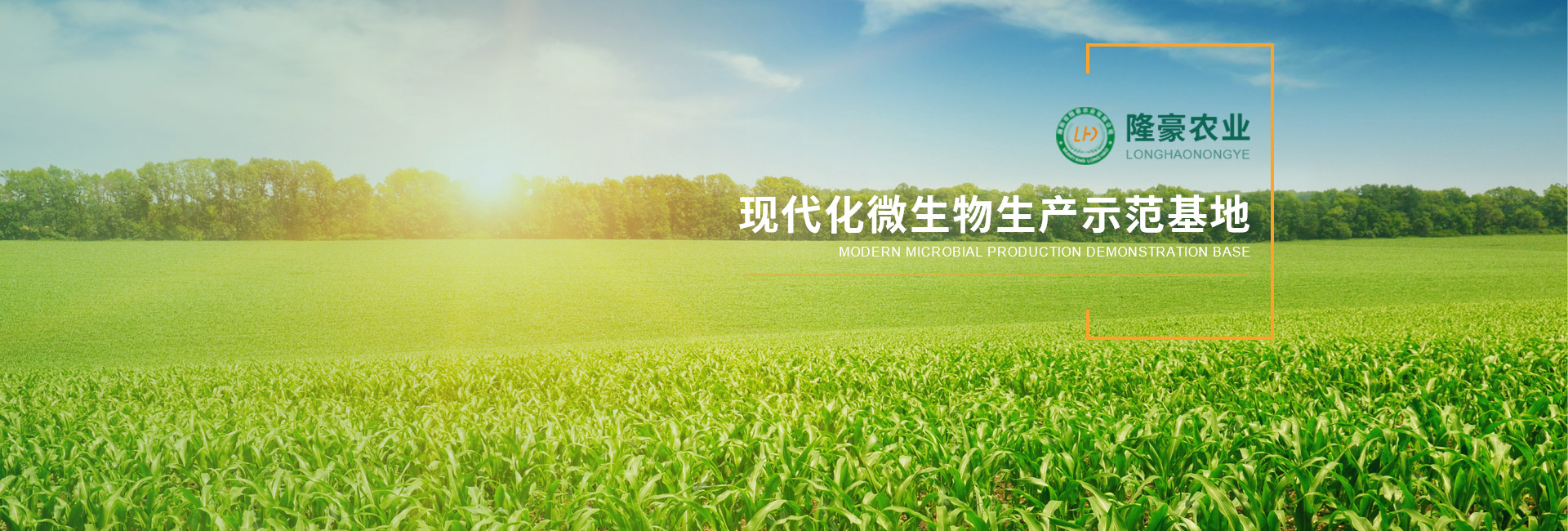 四川玉米秸稈飼料