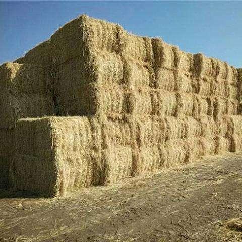 四川秸秆饲料发展养羊,需采取四方面的配套技术措施
